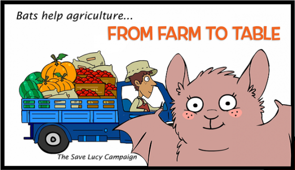 Save Lucy Campaign Banner Image