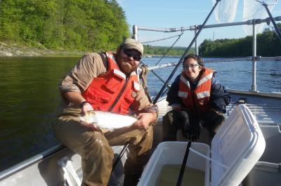 George Maynard (PhD student) and Tal Kleinhause-Goldman (undergraduate assistant) release a radio tagged American shad in to the Penobscot River after capture by electrofishing.