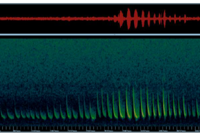 spectrogram of silver-haired or big brown bat call