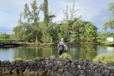 Research being conducted in Hawaiin fishpond