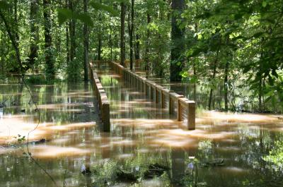 Flooded boardwalk at White River National Wildlife Refuge