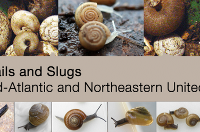 Land snails and slugs of the Mid-Atlantic and Northeastern United States