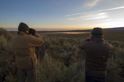 Counting sage grouse