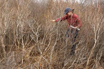 A researcher explores young forest habitat.