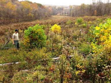 Ross Lake Wildlife Area, southern Ohio