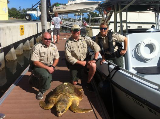 Loggerhead recovery effort in Florida