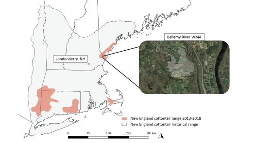 New England Cottontail Mapping
