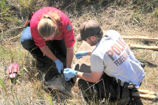 Investigation of a mule deer poaching incident