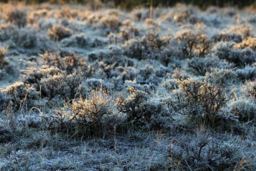 Sagebrush landscape